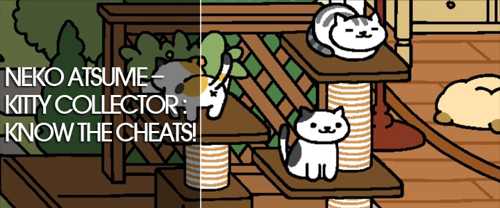 Neko Atsume – Kitty Collector : Know the cheats!