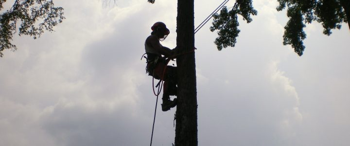 Steps to Follow Before Opening Tree Removal Service