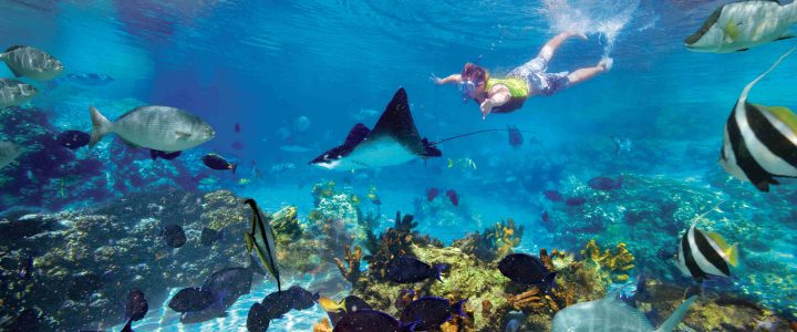 A Beginner's Guide For Snorkeling
