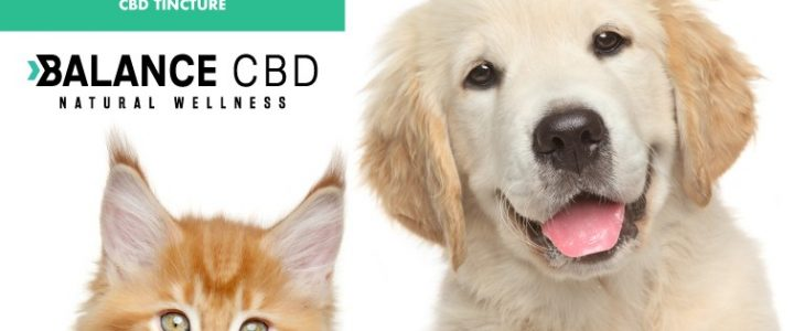 Why should you always choose an online platform to purchase CBD oil?